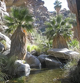 Lagoon Palm Springs